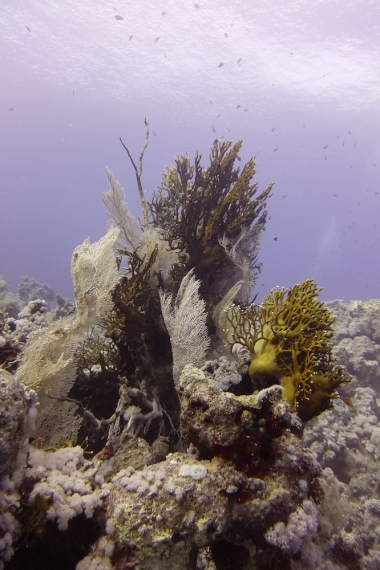 egypt_jackfish_alley_corals