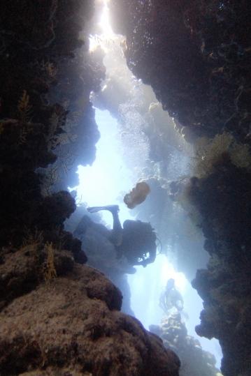 egypt_jackfish_alley_swimthrough