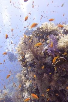 egypt_shar_yolande_corals2