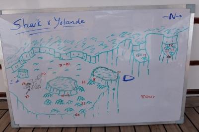 egypt_shark_yolande_plan