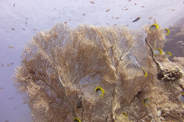 egypt_small_crack_sea_fan
