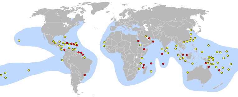 Nesting location of Hawksbill sea Turtle By Pinpin (own work from Inscape) [GFDL (http://www.gnu.org/copyleft/fdl.html) or CC BY-SA 3.0 (http://creativecommons.org/licenses/by-sa/3.0)], via Wikimedia Commons