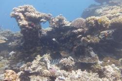 egypt_kingston_corals