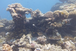 egypt_kingston_corals