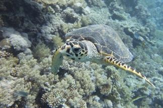 egypt_kingston_turtle